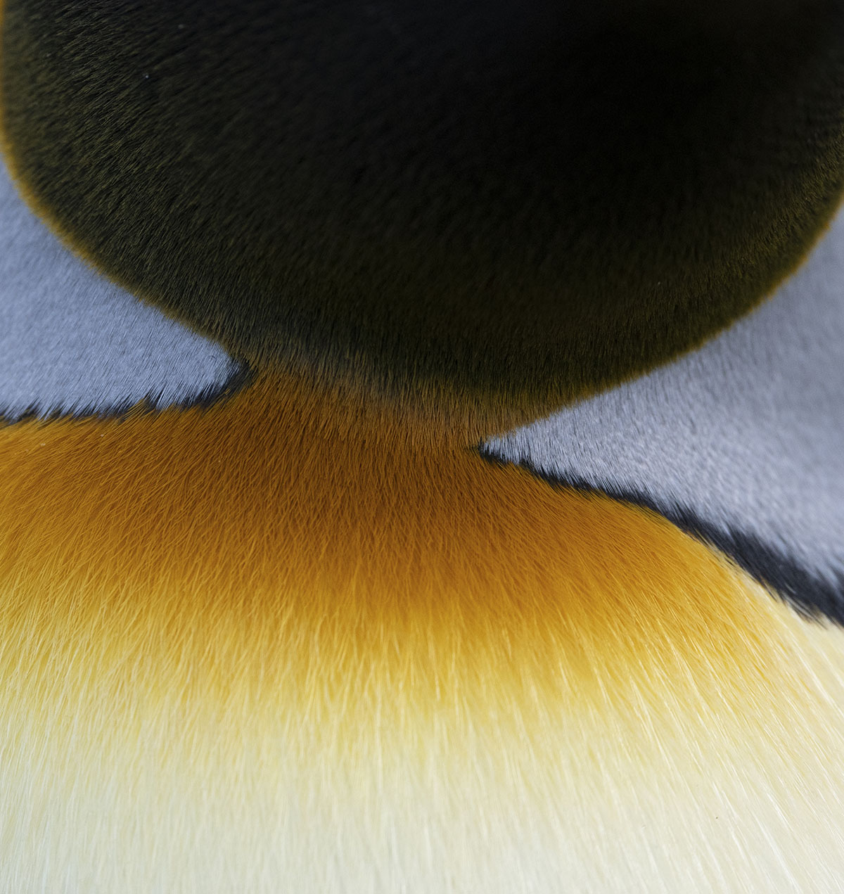 Abstract Penguin