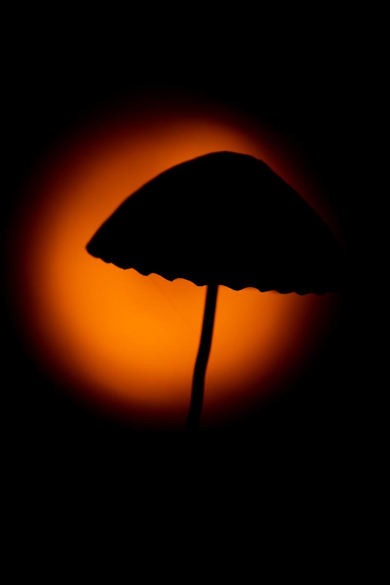 Fungi silhouette