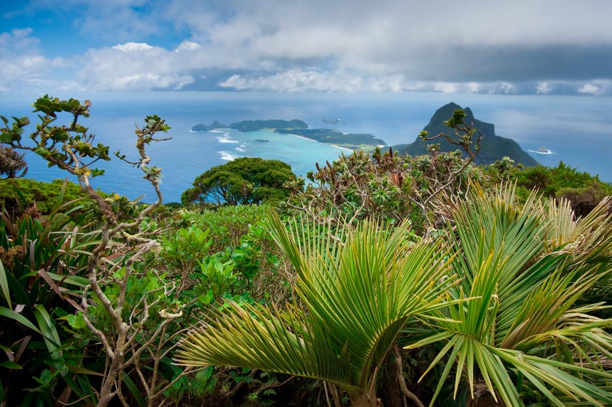 View to Mt Lidgebird - Lord Howe Island