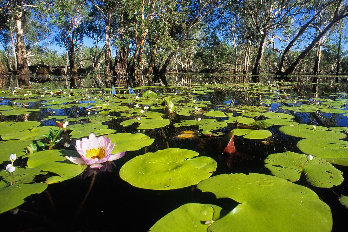 Yellow Water - Kakadu N.P