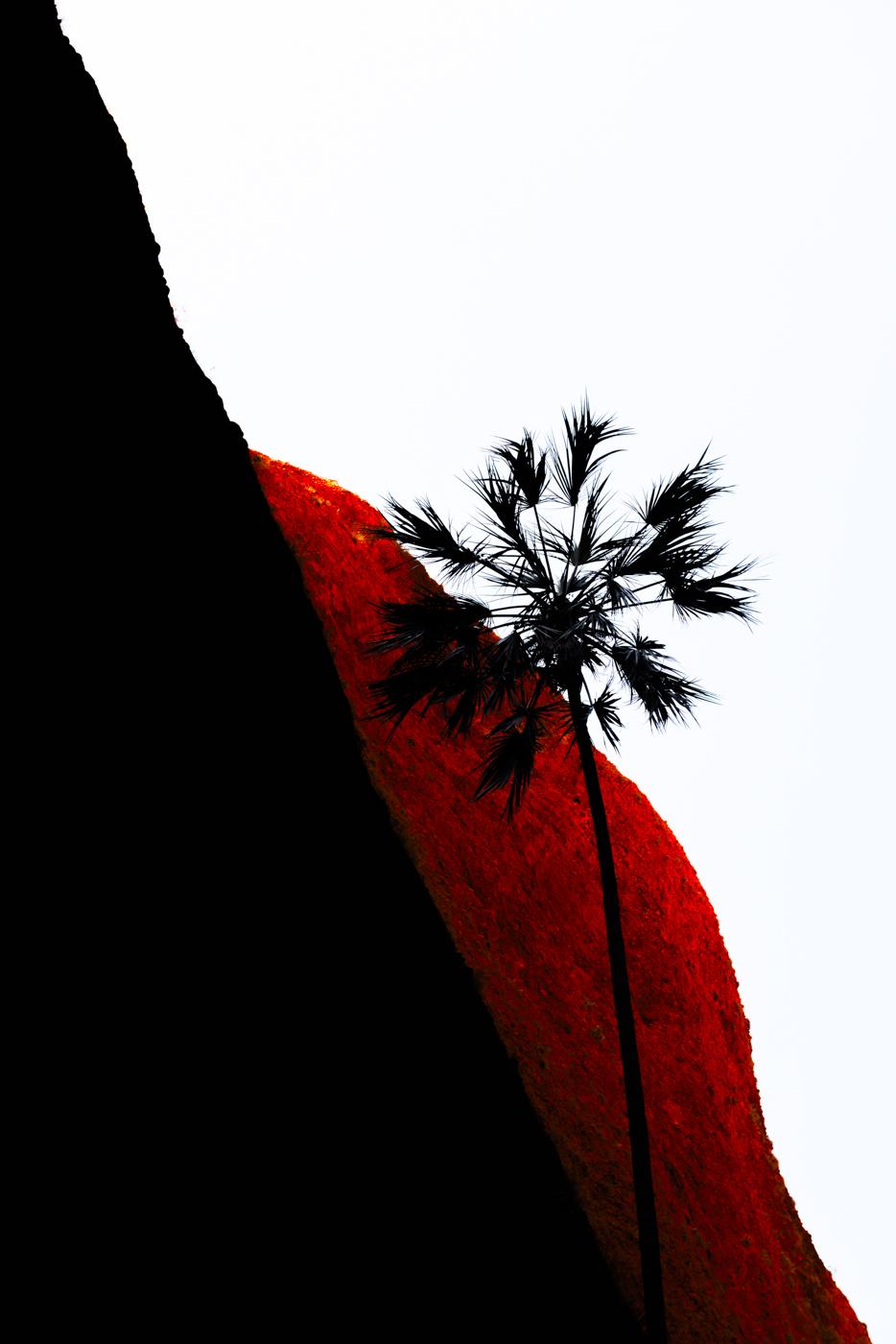 Ying Yang Palm