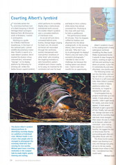 Courting Albert's Lyrebird Australian Geographic – January-March 2001