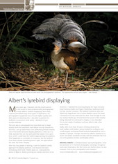 Albert's Lyrebird Wildlife Australia Magazine Summer 2010