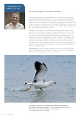 Photography Masterclass – Pacific Gull Australian Birdlife – Vol.1.1 – March 2012
