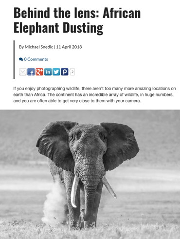 Behind the lens: African Elephant Dusting - 11 April 2018