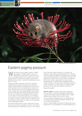 Eastern Pygmy Possum Wildlife Australia Magazine – Summer 07