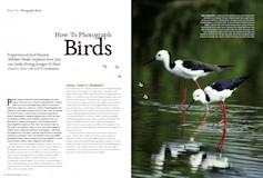How to Photograph Birds Australian Photography – March 2006