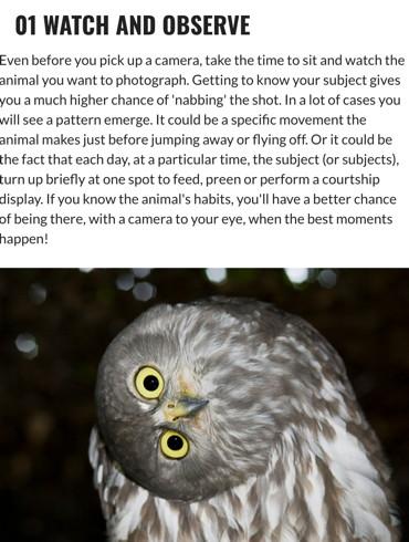 How to shoot stunning wildlife shots (part one) Australian Photography Online 25 January 2016