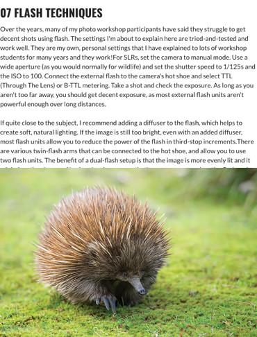 How to shoot stunning wildlife shots (part three) Australian Photography Online 10 February 2016
