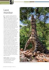 Lace Monitor Wildlife Australia Magazine – Winter 09