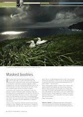 Masked Boobies Wildlife Australia Magazine – Autumn 09