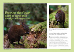 Four on the Floor: Musky Rat-kangaroos Wildlife Australia Magazine – Spring 2010
