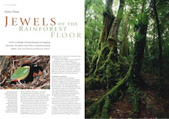 Jewels of the Rainforest Floor Wingspan – March 2002