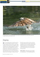 Osprey Wildlife Australia Magazine – Winter 08