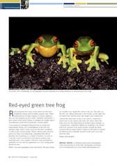 Red-eyed Green Tree Frogs Wildlife Australia Magazine – Spring 08
