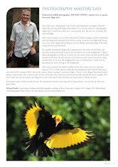 Photography Masterclass – Regent Bowerbird Australian Birdlife – Vol 2.2 – June 2013