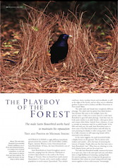 The Playboy of the Forest Wingspan – June 2008