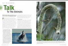 Talk to the Animals – Photographing Wildlife Behaviour Australian Photography – March 2009