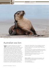 Australian Sea Lion Wildlife Australia Magazine Autum 2010