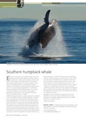 Humpback Whale Wildlife Australia Magazine – Spring 09