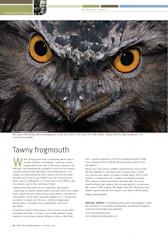 Tawny Frogmouth Wildlife Australia Magazine Summer 09