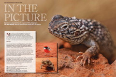 In The Picture – Photographing Wildlife Wildlife Australia Magazine – Summer 2012