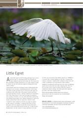 Little Egret Wildlife Australia Magazine Winter 2010